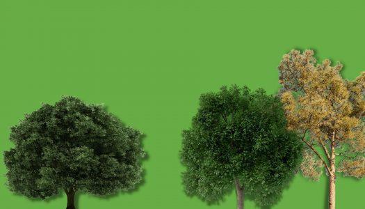 Svetovni dan Zemlje – Miss Dreves